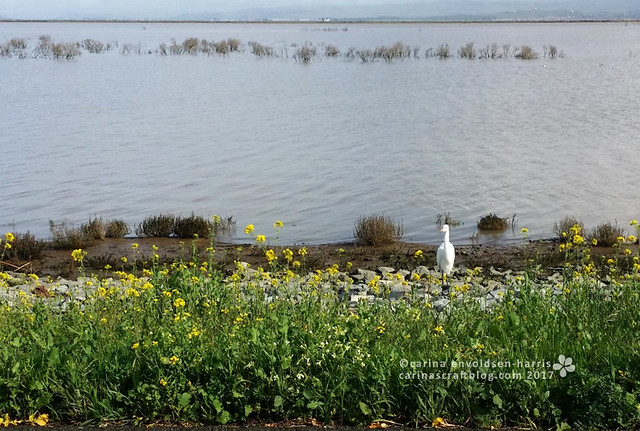 San Pablo Bay National Wildlife Refuge [Feb 10]