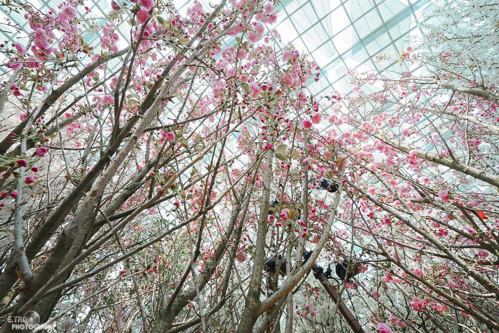 Blossom Bliss - 001