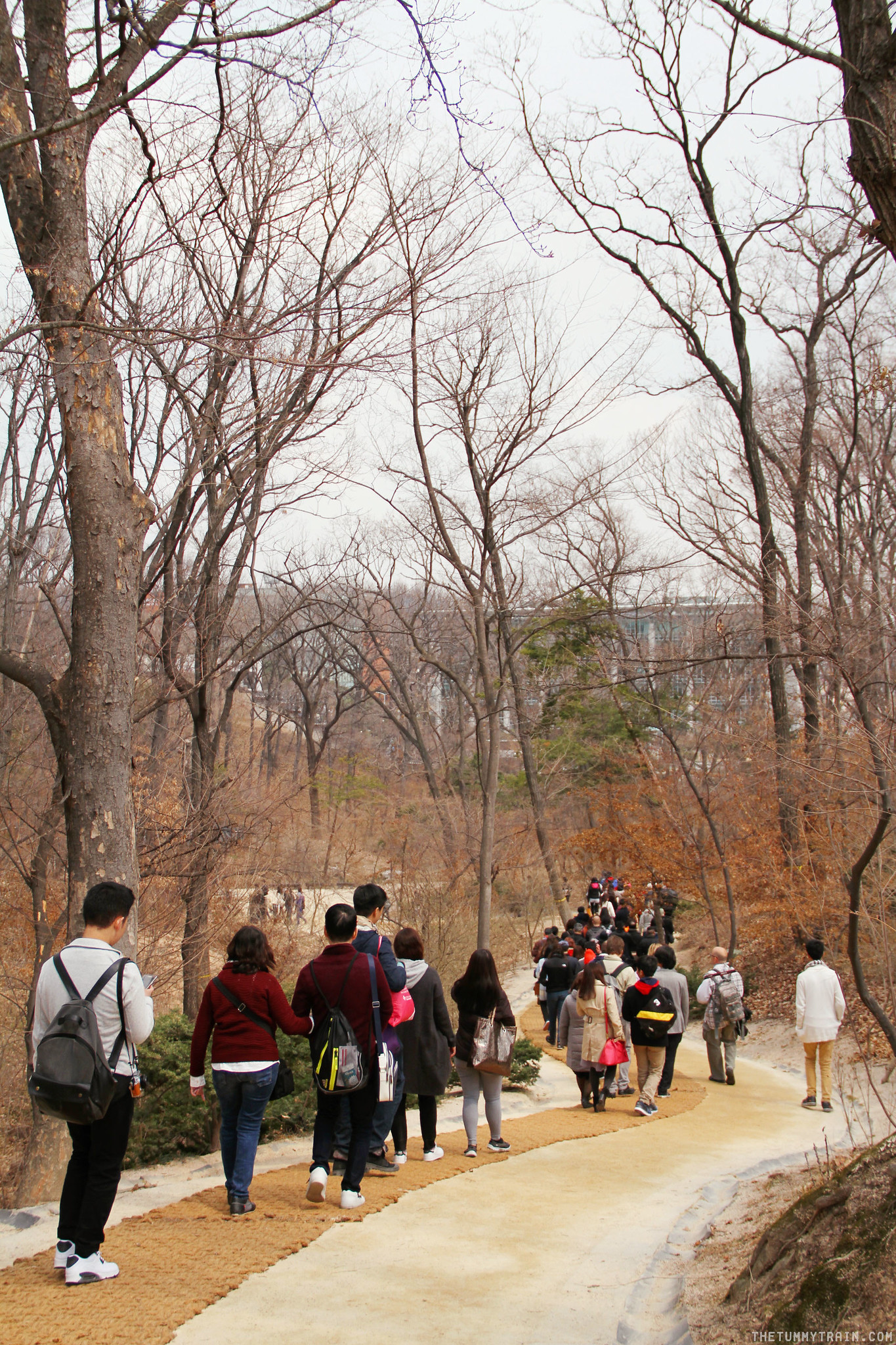 33401757921 46ffbf0989 k - Seoul-ful Spring 2016: Greeting the first blooms at Changdeokgung Palace