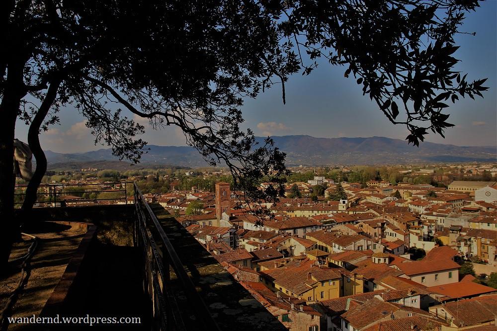 Lucca Ausblick Torre Guinigi mit Baum