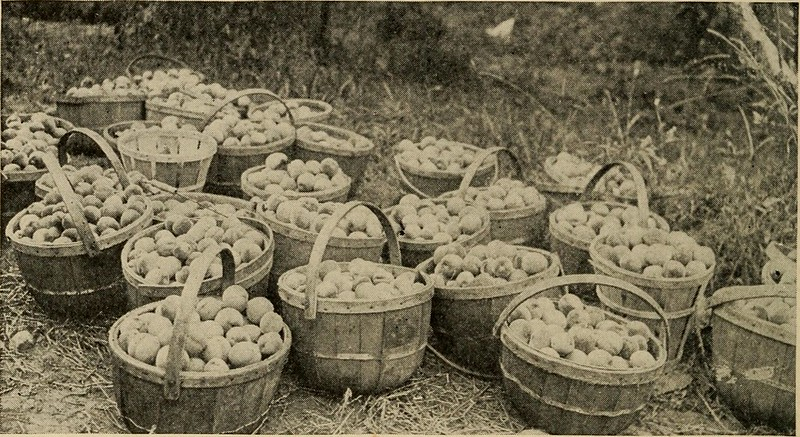 "Image from page 263 of ""Productive orcharding, modern methods of growing and marketing fruit"" (1917)"