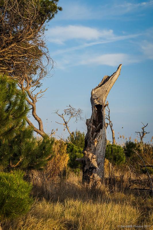 Un tronco hueco de un árbol muerto