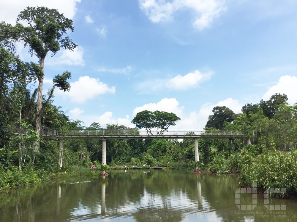 keppel discovery wetlands, learning forest, orchid island, sbg, singapore, singapore botanic gardens, sph walk of the giants, unesco, where to go in singapore