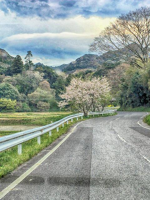 Chiba Momji (maple) road