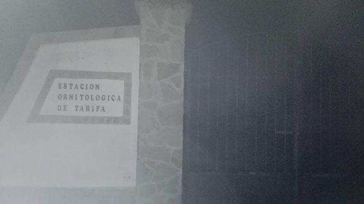 ornitorrinco1