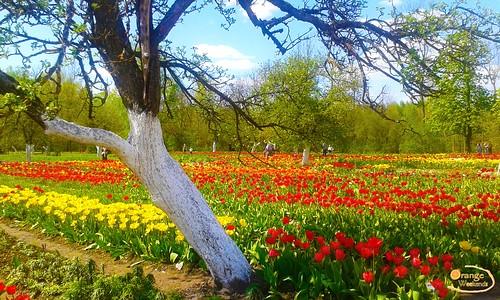 Фестиваль Тюльпанов в Бурбишкес