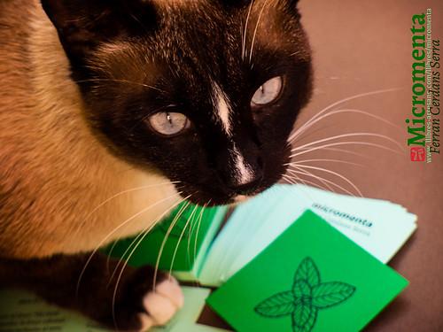 Micromenta, de Ferran Cerdans Serra, amb la Basati, la gata autoadoptada