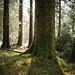 Big Tree Walk - The Black Gates
