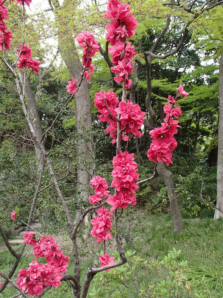 Det blommar på bar kvist?