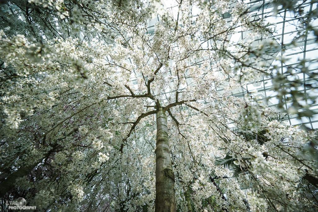 Blossom Bliss - 005