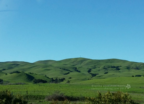 Driving to Concord from Napa [Feb 11] | by Carina » Polka & Bloom