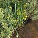 Bowyer's Water, Cheshunt Marsh