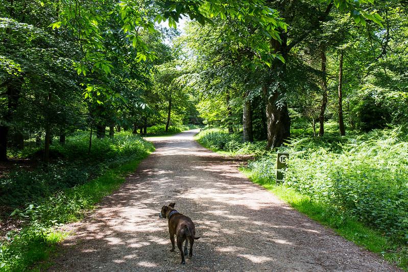 Jez walks through Wilverley Enclosure