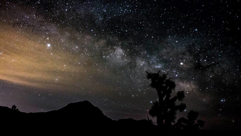 Joshua tree under the Milky way.