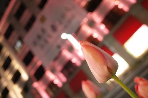 Nihonbashi Sakura light up 05