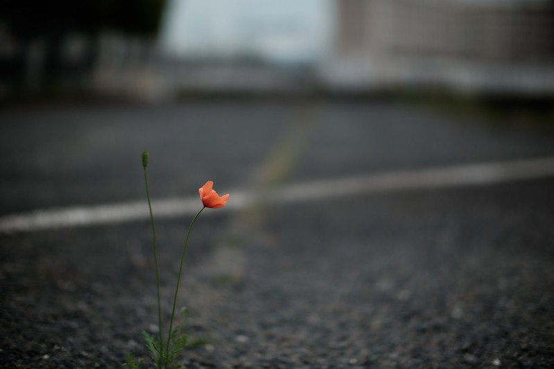 Flower blooming in the parking lot