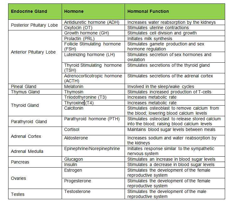 Endocrine Glands And Hormones Secreted And Actions Table Flickr