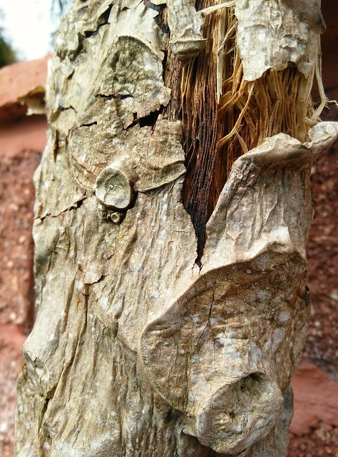 bent tree bark