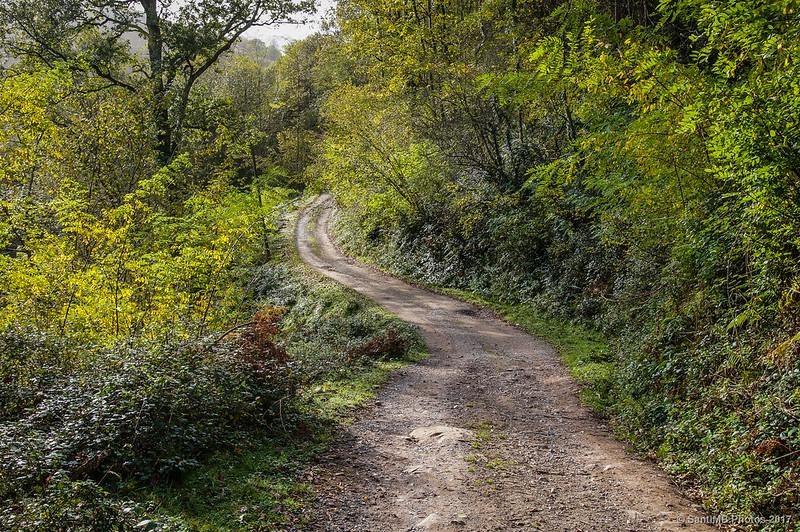 Abundante vegetación en el camino de Orabidea
