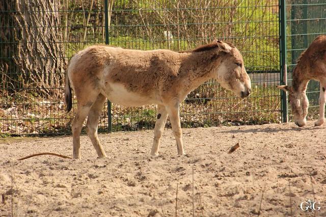 Frühlingstag Tierpark Friedrichsfelde am 02.04.201791