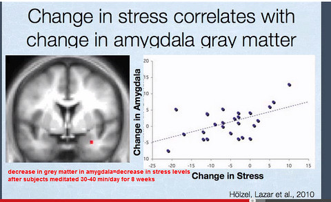 Meditation affecting the amygdala