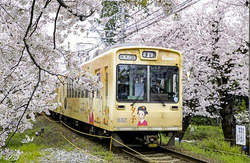 Trenes entre los cerezos de Kyoto