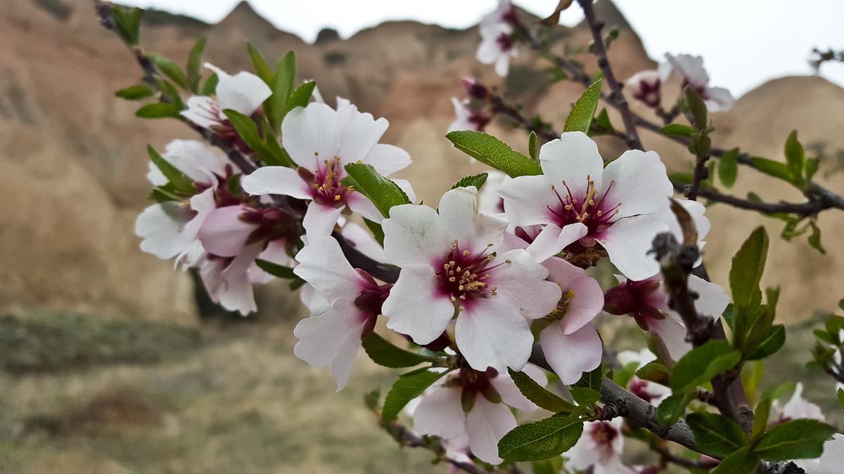Cappadokia_20170414_134904