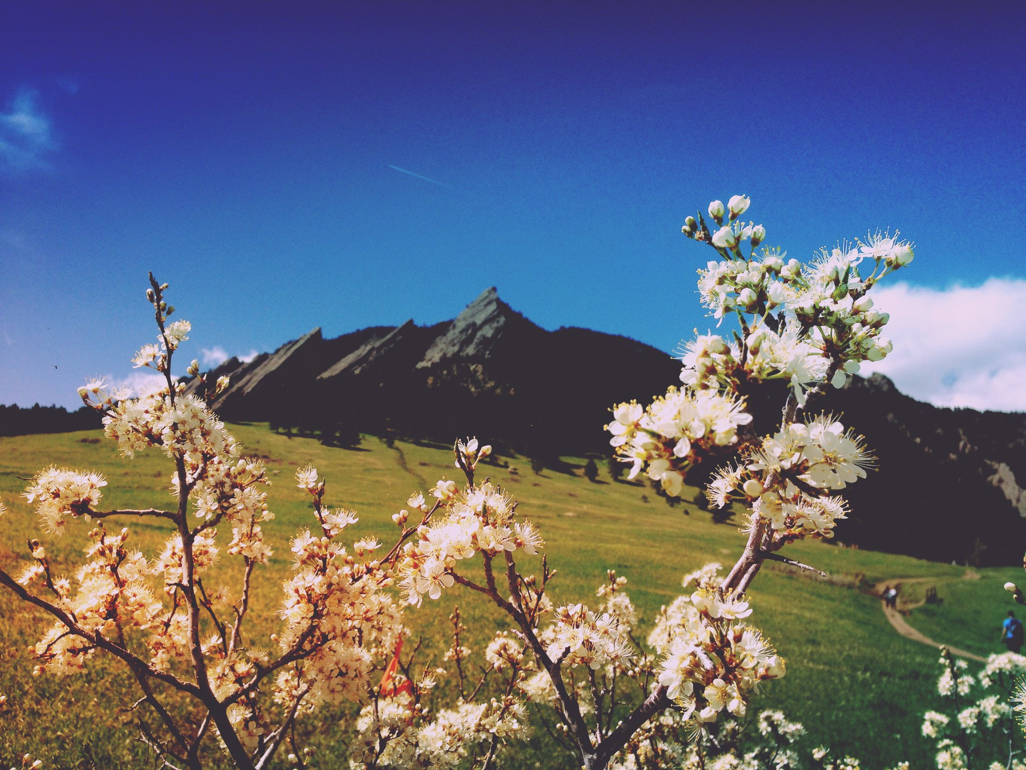 Flatirons in Spring