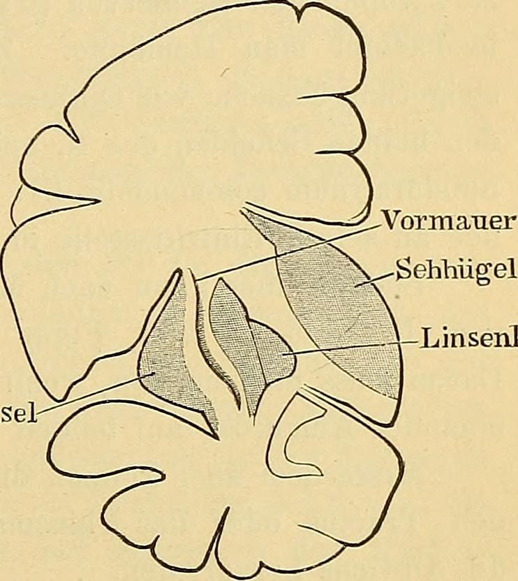 symptome krankheiten