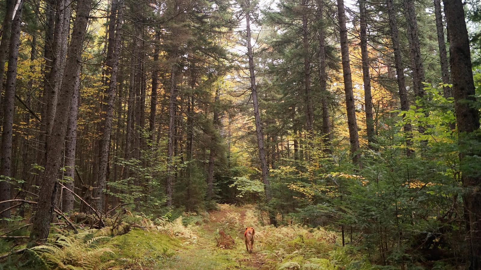 Vermont2016-119 | by krisknow