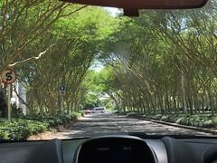 2017-03-11 Durban trees