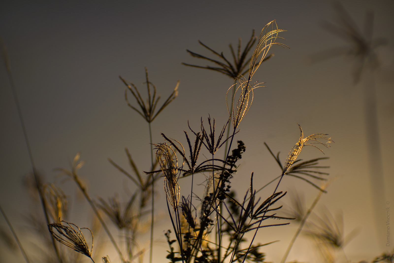 golden filigree