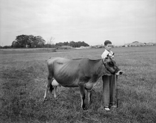 N_53_16_4292 Boy and Cow Oct 1949 | by State Archives of North Carolina