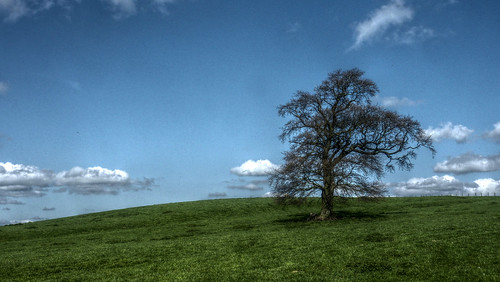 Dursley oak tree