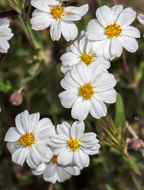 Flower-3-7D2-040517