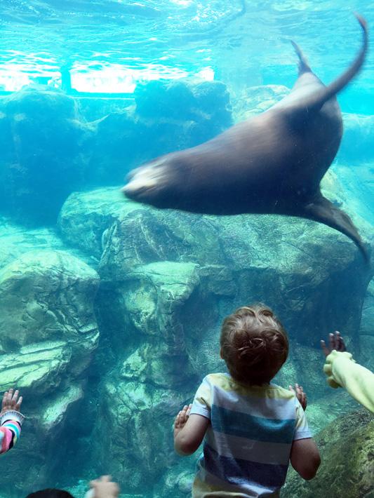 060516_aquarium12