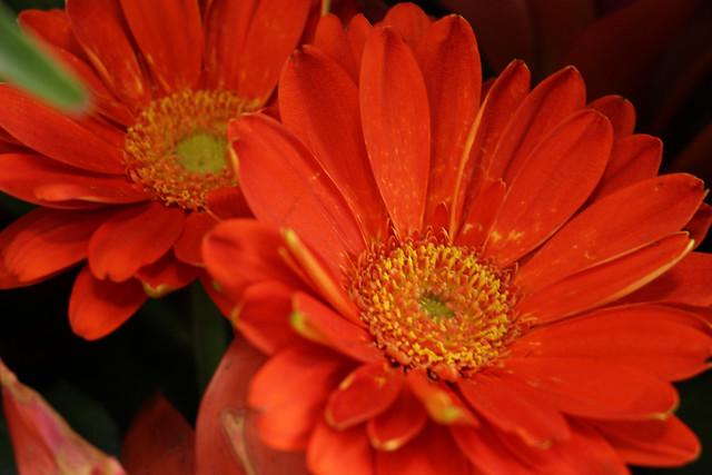 flowers (74)