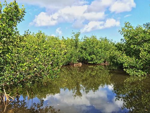 Mangroves 20140423