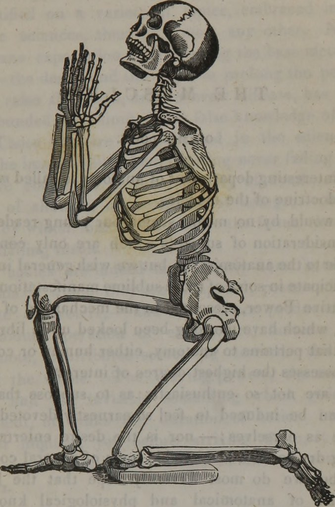 Image From Page 54 Of The Class Book Of Anatomy Designe Flickr