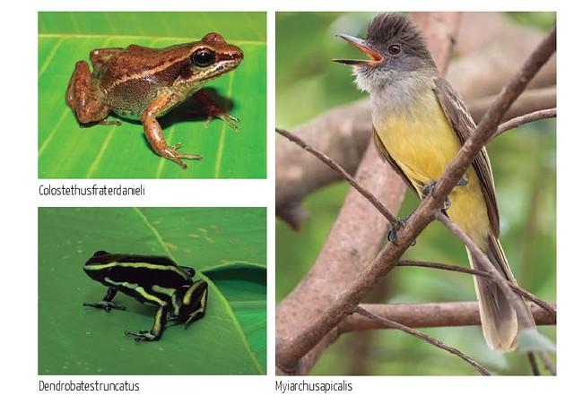 Especies que se afectarían con Cañafisto