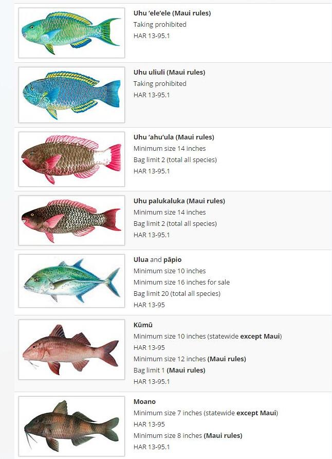 夏威夷捕魚規則中針對個別魚種的圖示、夏威夷語名稱、以及禁捕或限制的尺寸與季節等規範 (資料來源:http://dlnr.hawaii.gov/dar/fishing/fishing-regulations/marine-fishes-and-vertebrates/)