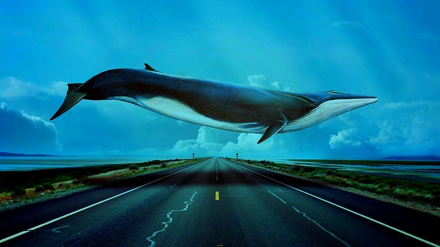 Blue-Whale-Awesome-Wallpapers