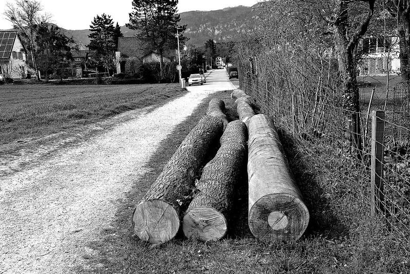 Logs 31.03.2017