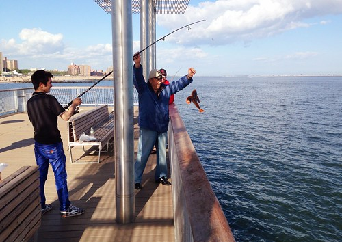 Men fishing off the coney island steel pier in new york ci for Fishing in new york city