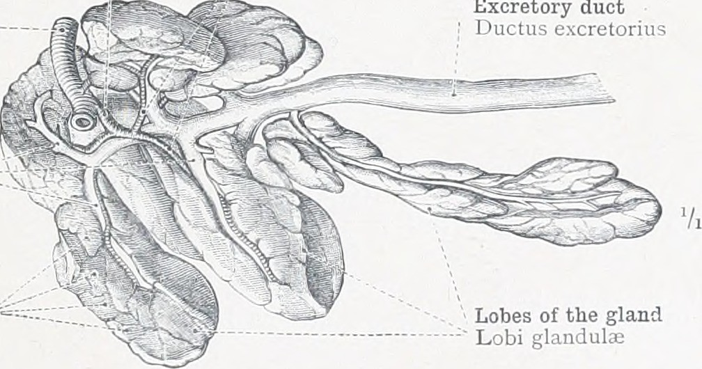 Image From Page 10 Of An Atlas Of Human Anatomy For Stude Flickr