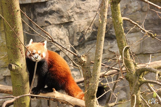 Frühlingstag Tierpark Friedrichsfelde am 02.04.201753