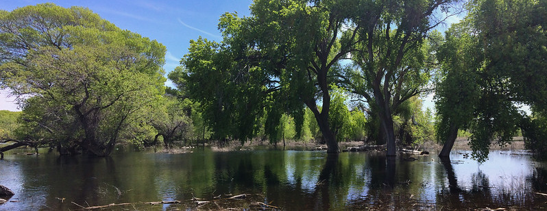Willow Lake Cottonwoods