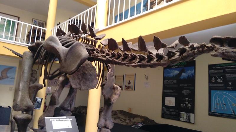 Museu dinossauros