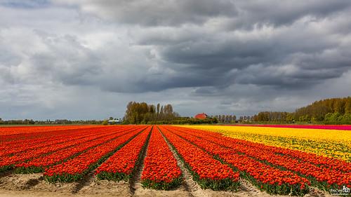 Gray, Pink, Yellow and Orange