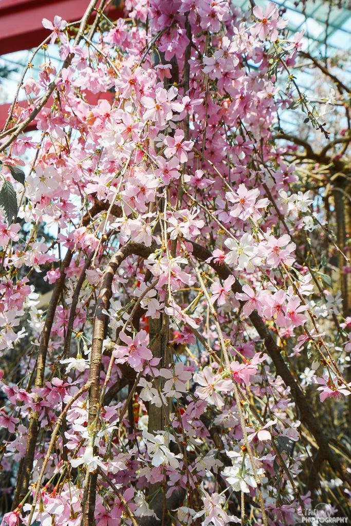 Blossom Bliss - 008